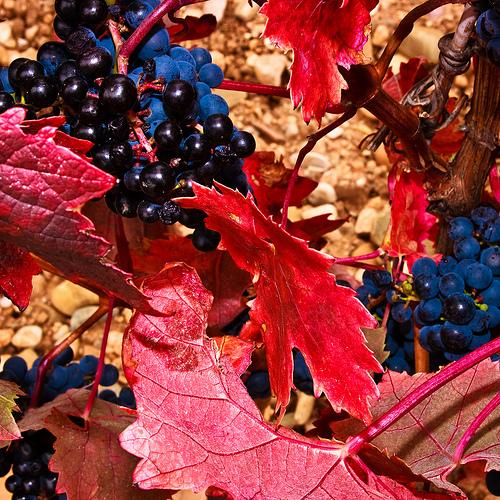 Etymology of Rioja