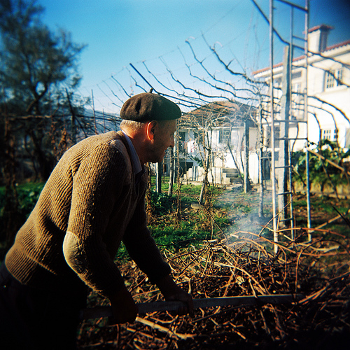 Portugal Vines