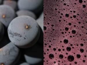 uva-prieto-picudo