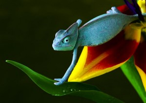 Arinto - Chameleon