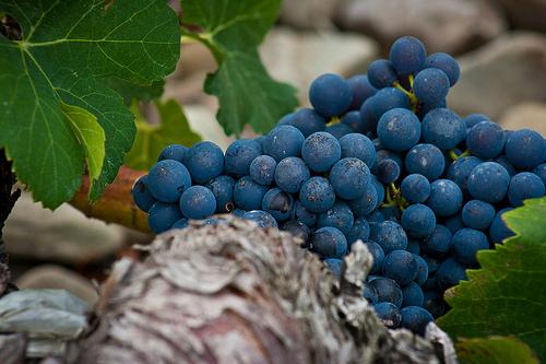Spanish grape - Natural wine