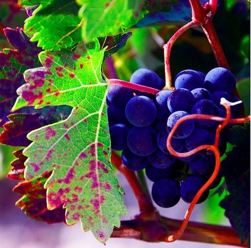 Rioja and UNESCO