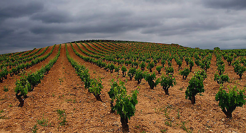 Rioja Terroir