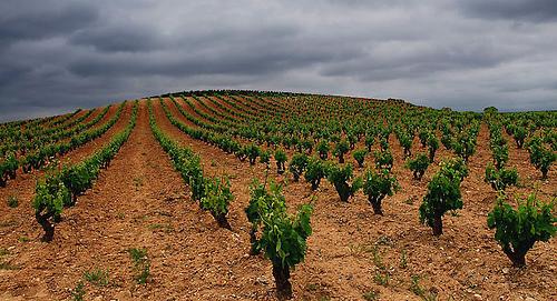 Rioja Terroir