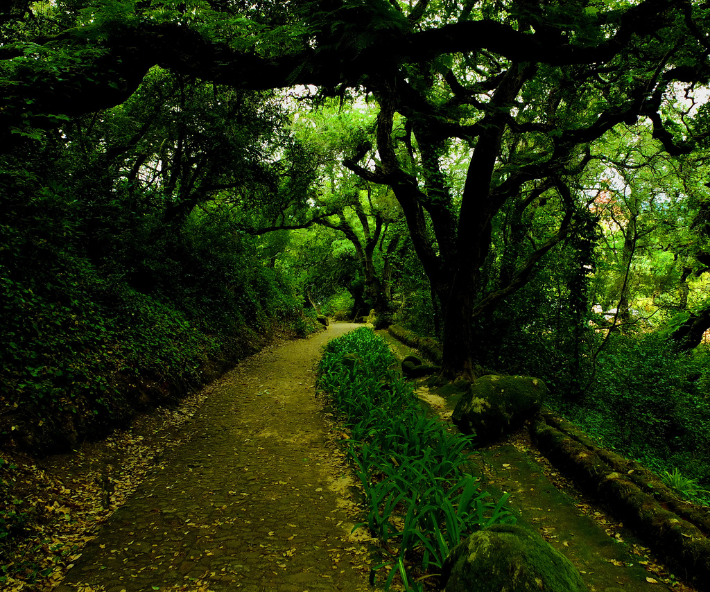 sintra forest