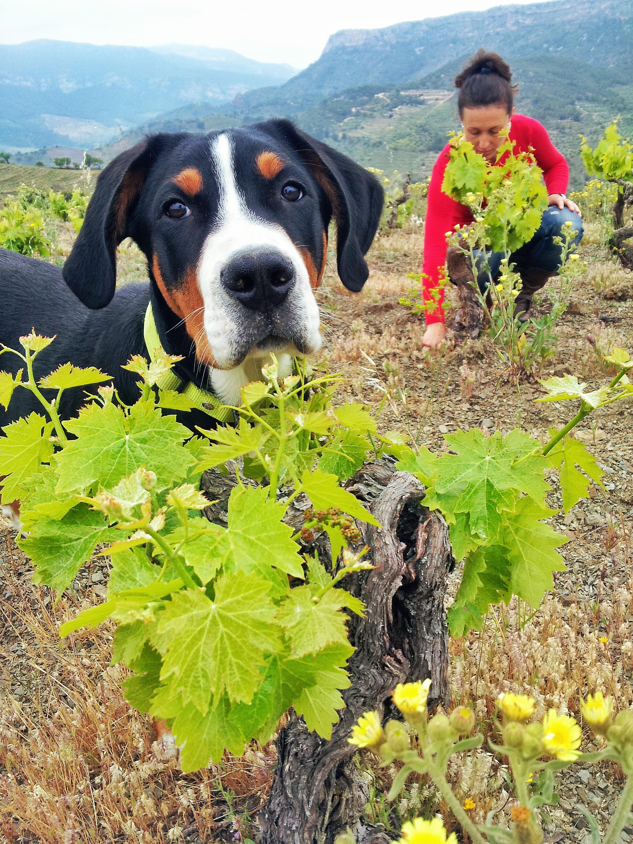 Mas Alta Vineyards, Spain