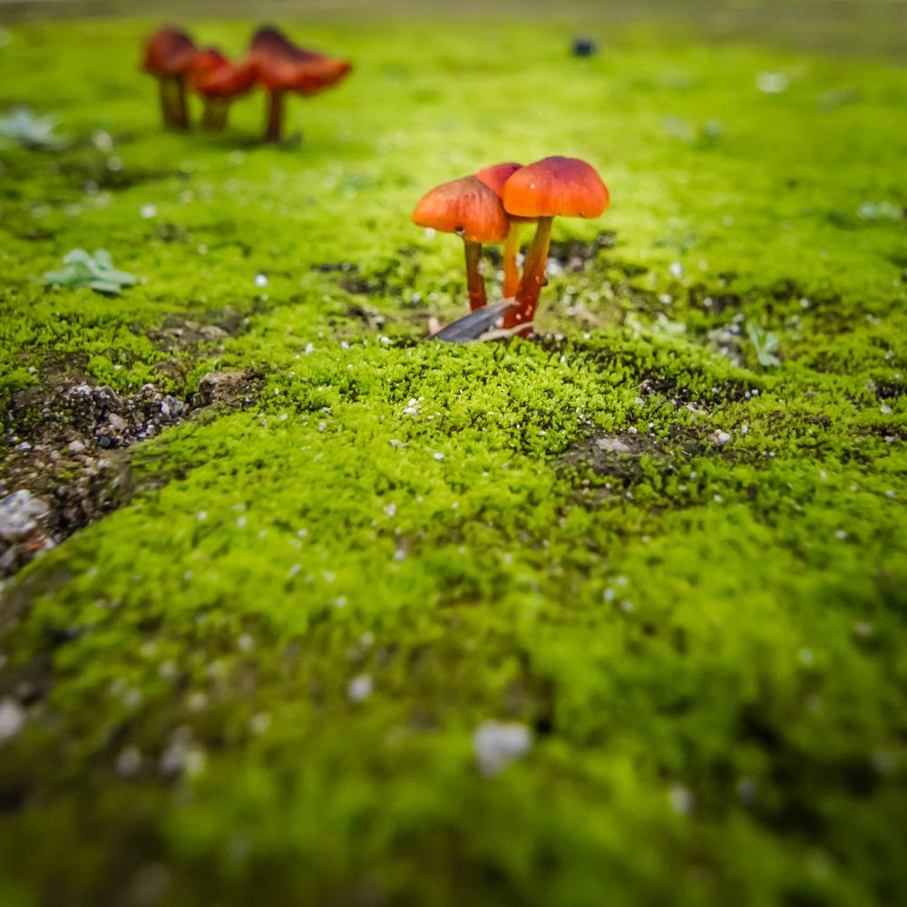 Mushrooms of Portugal