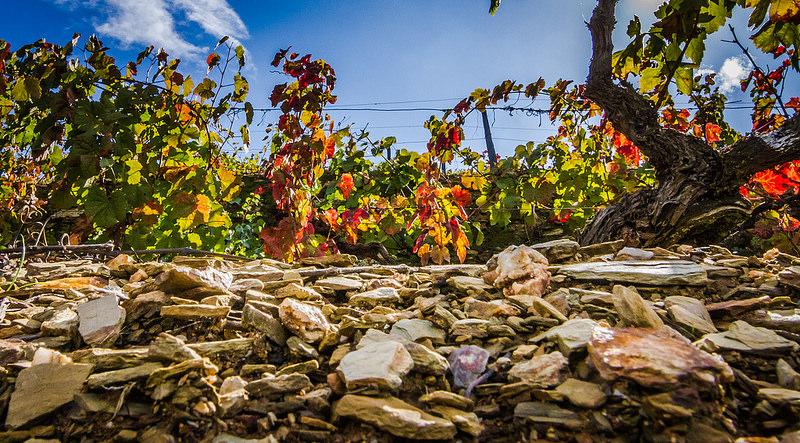 Douro Valley schist soil