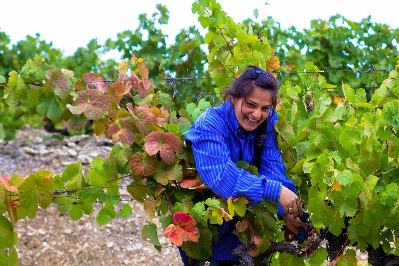 Picking grapes Douro