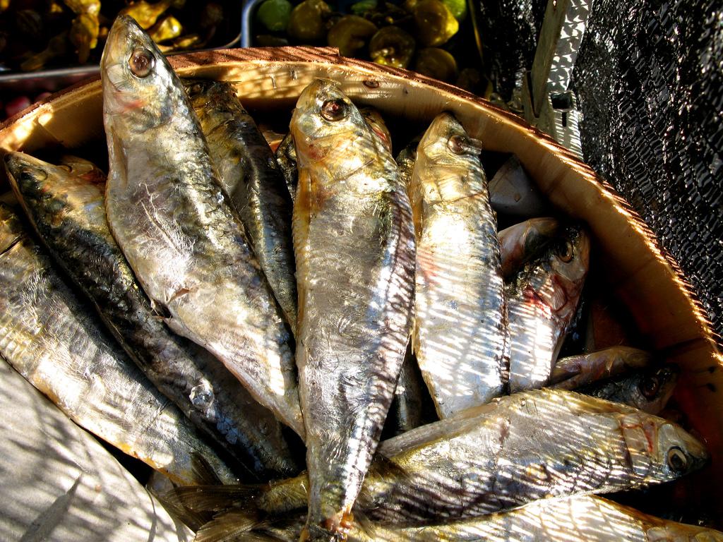 Spanish Fish - Pozuelo de Alarcon