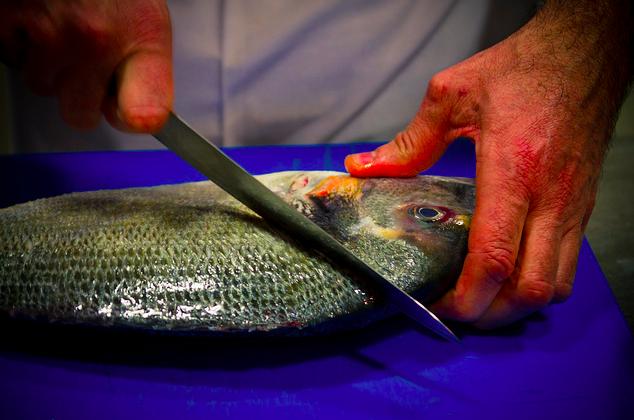 Fish Portugal