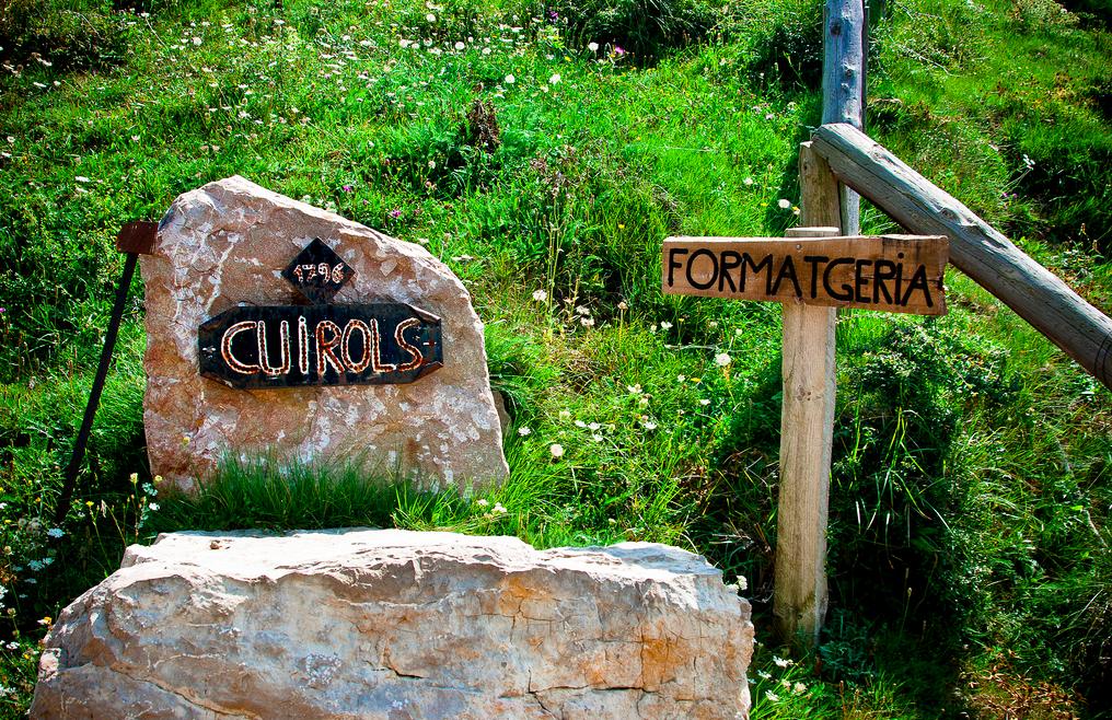 Wines of Catalunya