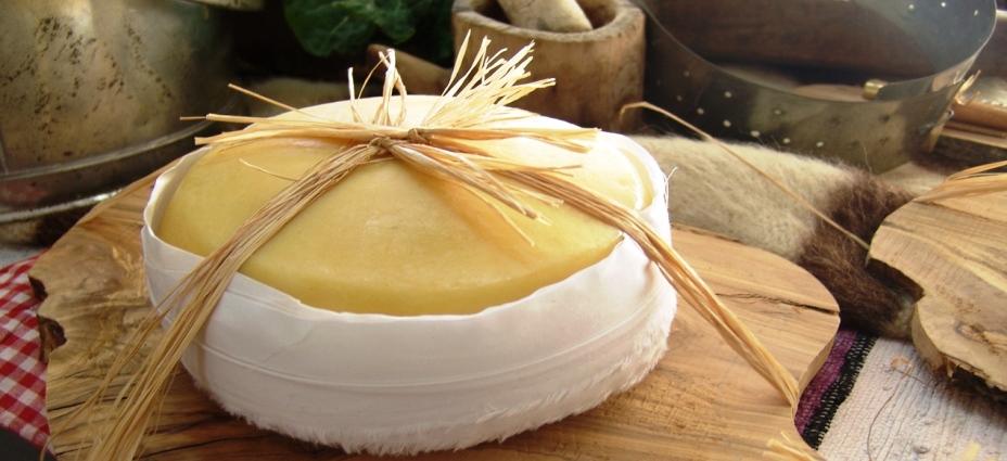 Cheese of Serra da Estrela