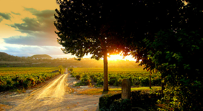 cvne vineyards