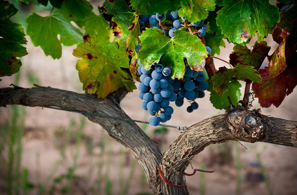 Wineries near Madrid