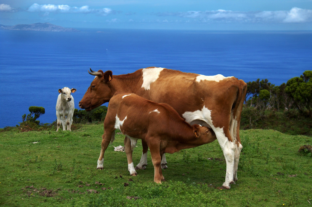 Portuguese Beef