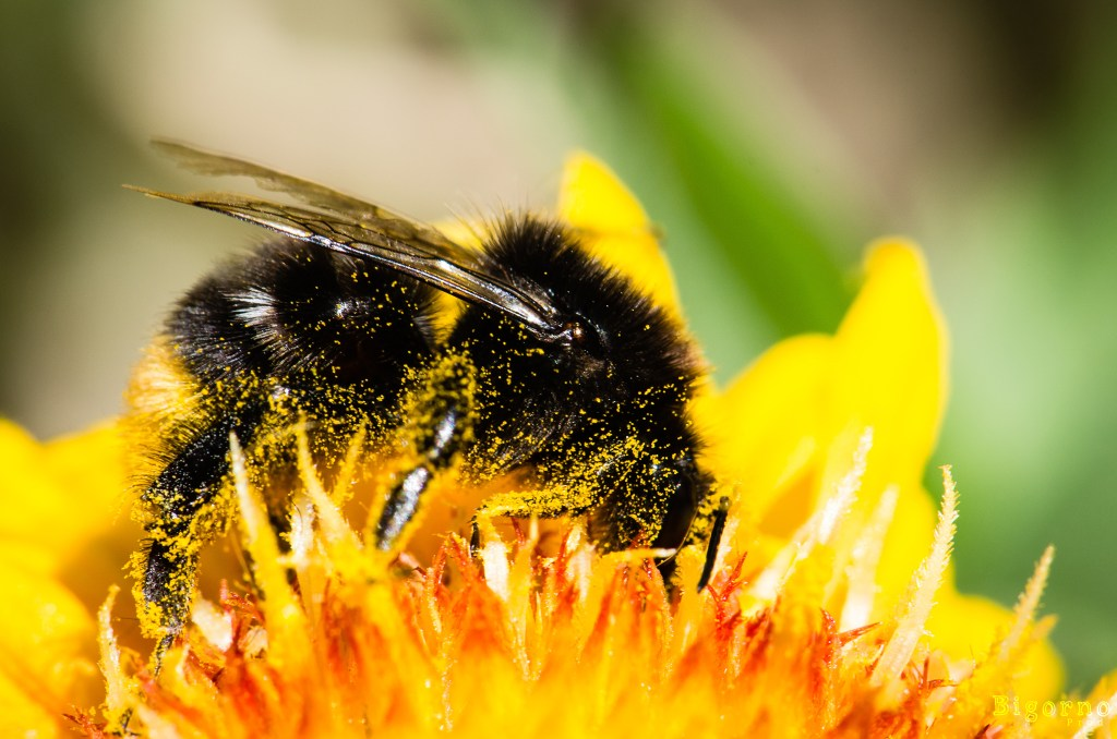 Beekeeping Portugal
